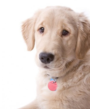 Dog-ID-tags