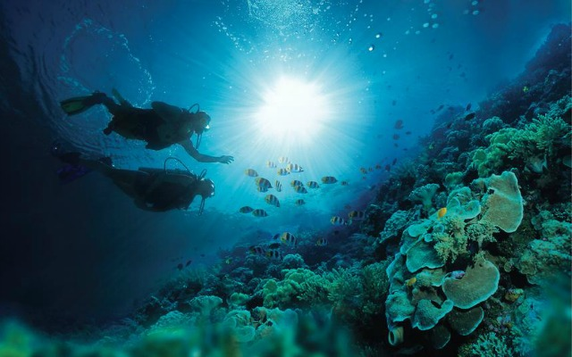 summer-scuba-dive
