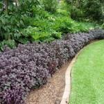 Garden edging plant