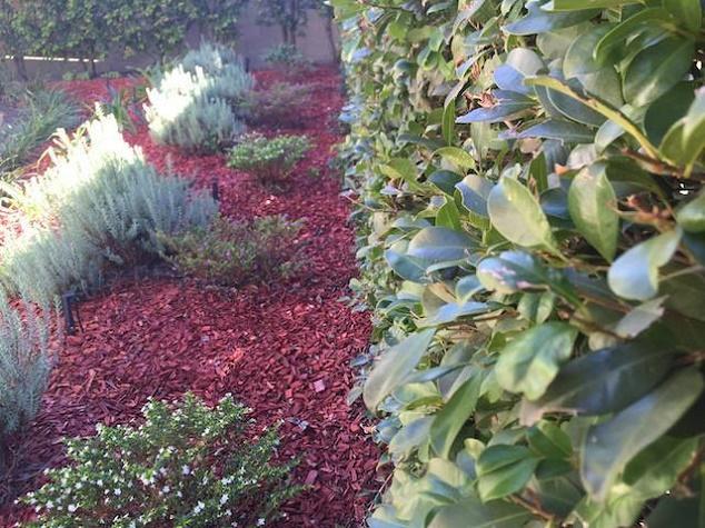 Garden-edging-plant