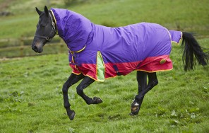 horse with foal rugs