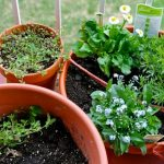 Plants That You Can Grow at Your Home