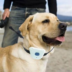 Ultrasonic Bark Collar