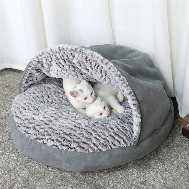 cats in their igloo bed