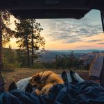 picture of persons sleeping in the back of a vehicle while camping with their dog in the woods