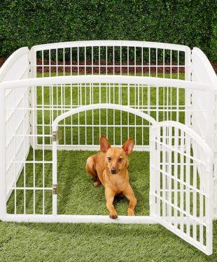 dog inside his playpen outdoor in the garden