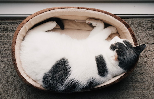 cat donut bed
