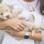 picture of a person holding a dog on a leash
